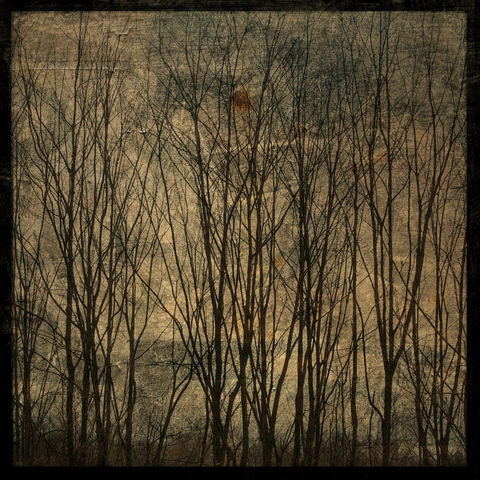 Alsace,Trees,No.,1,-,8,in,x,Altered,Photograph,Art,Photography,Nature,surreal,digital,trees,brown,texture,moody,france,paper,ink