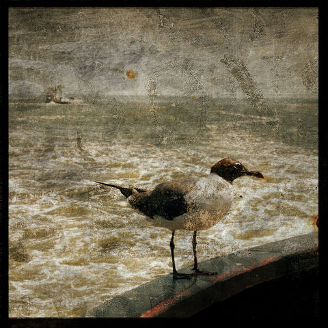 Hitcher,-,8,in,x,Altered,Photograph,Art,Photography,Surreal,digital,brown,texture,moody,sea,blue,altered,ocean,beach_art,seagull,paper,ink