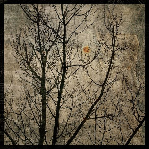 Sycamore,No.,1,-,8,in,x,Altered,Photograph,Art,Photography,Surreal,digital,brown,texture,moody,tree,sycamore,nature,paper,ink