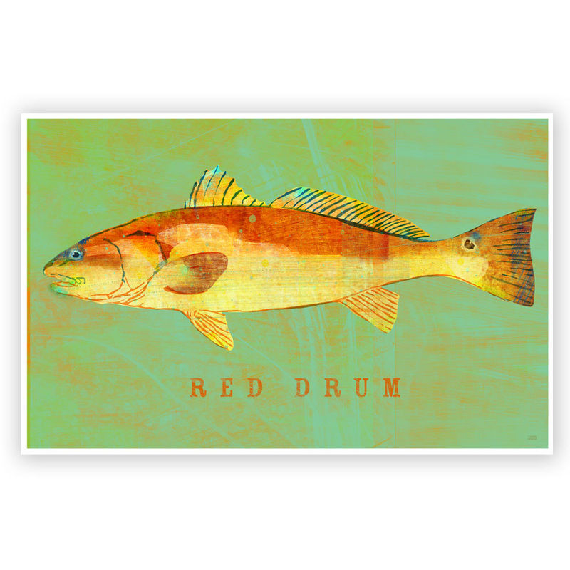 "Red Drum Art Print - Saltwater Fish Art - 8"" x 12"" or 6.5"" x 18"" - product images  of"