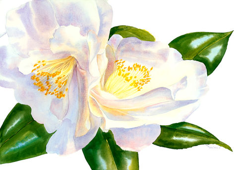 Spring,Glory,original,watercolor,white camellias, spring,flowers,florals,watercolor original, painting, green leaves, mary ellen golden