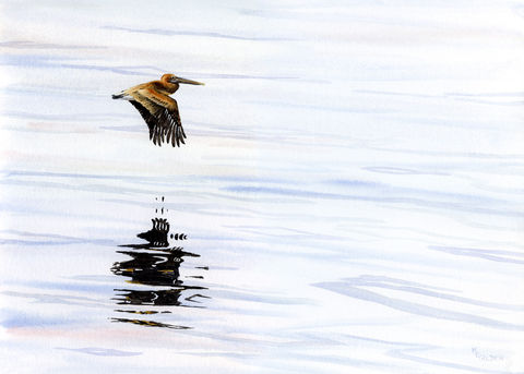 Tranquil,Reflections,Art Print Giclee, Soaring pelican, beach painting, watercolor giclee bird art, reflections in water, seashore image, coastal beach decor, pelican in flight, seascape with bird, blue and brown, art of the shore