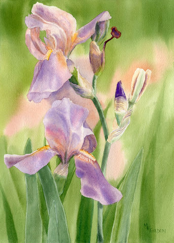 Colors,of,Spring,2,Iris, watercolor giclee, spring flowers