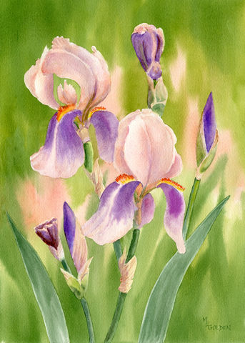 Colors,of,Spring,3,floral art print, iris, peach and lavender, flowers, series