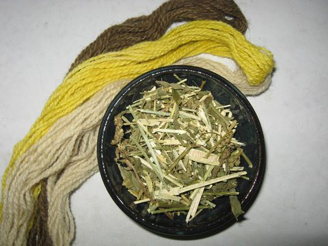 Weld,Natural,Dye,,Reseda,luteola,,Leaves,,Stems,,Flowers,natural dye, weld, dye plant , Reseda luteola , natural dyes, weld dye , natural dye plant, weld dye plant, yellow natural dye , weld natural dye, natural fiber dye, yellow dye plant , BrushCreekWoolWorks, Brush Creek Wool Works