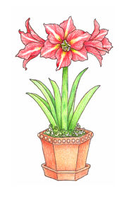 Pink Ink Wood Mounted Rubber Stamp Amaryllis - product image