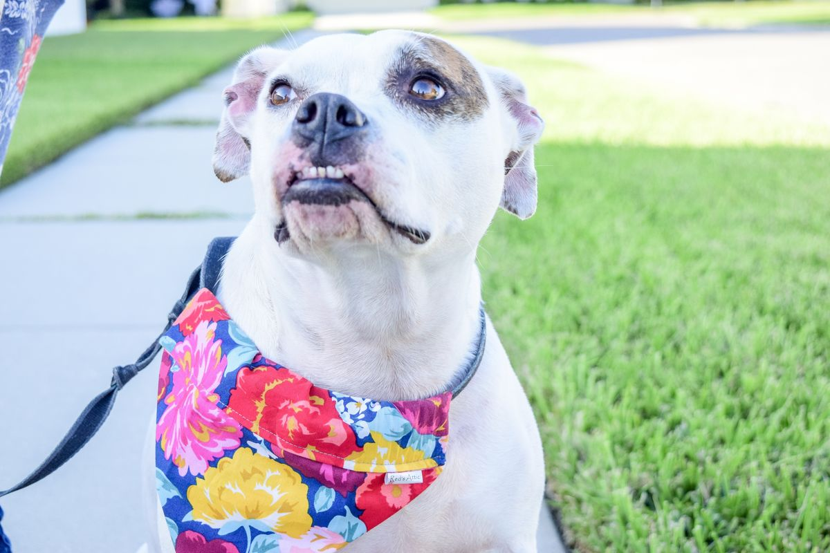 Dog bandana - Multi-Color Floral - product images  of