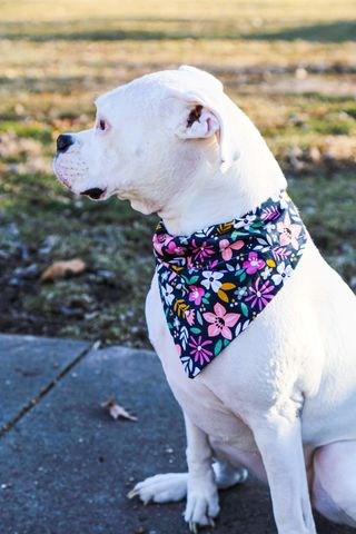 Dog,bandana,-,Bright,Floral,dog scarf,sweater,pet accessories, pet clothing, bandanas