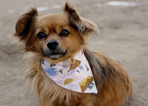 Dog,bandana,-,Camping,dog scarf,sweater,pet accessories, pet clothing, bandanas