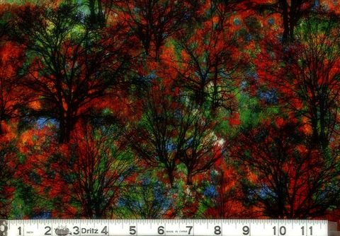 Cotton,Quilt,Fabric,Marblehead,North,Woods,Trees,Multi,Black,quilt fabric,cotton material,auntie chris quilt,sewing,crafts,quilting,online fabric,sale fabric
