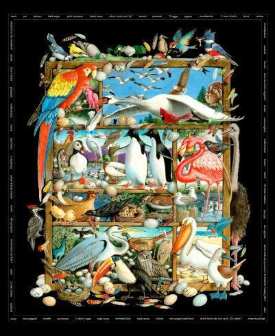 Cotton Quilt Fabric Birdwatching Birds Panel Black Multi - product images  of