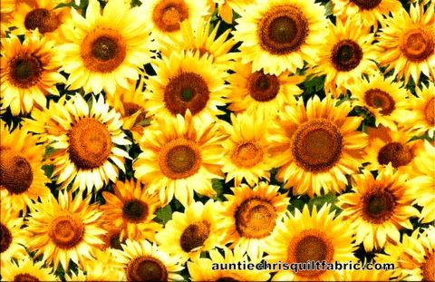 Cotton,Quilt,Fabric,Keepsake,Calico,Photo,Real,Sunflowers,Floral,,quilt backing, dresses, quilt fabric,cotton material,auntie chris quilt,sewing,crafts,quilting,online fabric,sale fabric