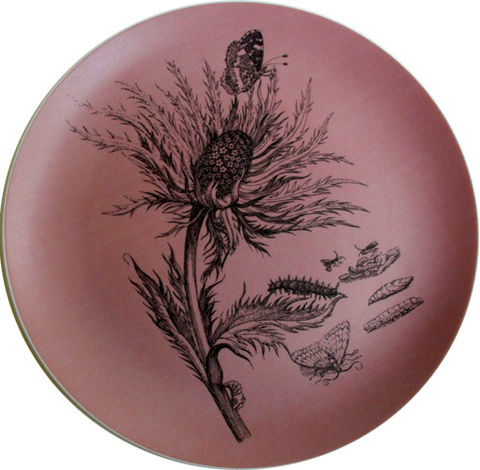 Pink,Thistle,Decorative,Botanical,Plate,Pink Decorative Botanical Plate Maria Sibylla Merian