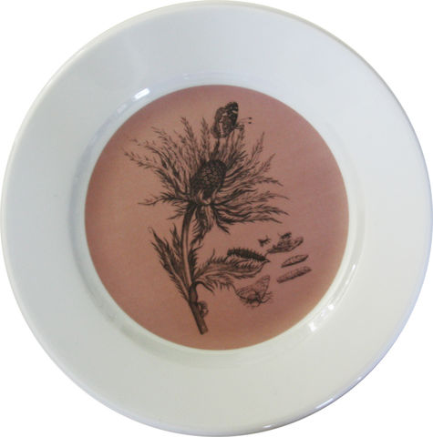 Pink,&,White,Thistle,Botanical,Decorative,Upcycled,Plate,Pink Decorative Botanical Plate Maria Sibylla Merian