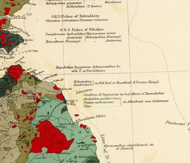 Old Map of United Kingdom Geological palaeontological 1854  - product image