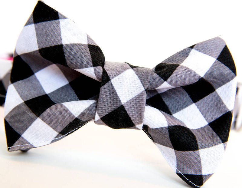 Dog Bowtie Collar - Black Gingham - product images  of