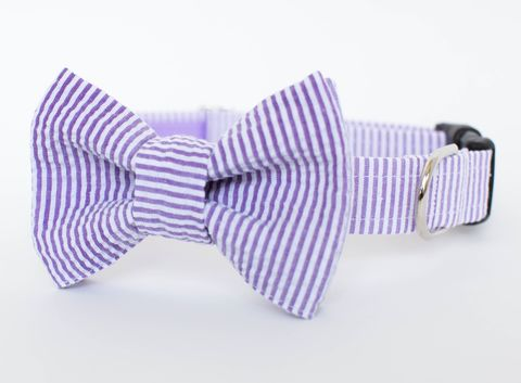 Dog,Bow,Tie,Collar,-,Purple,Seersucker,dog collar, dog bow tie, dog bowtie, bow tie dog collar, bowtie dog collar, wedding dog collar, purple, seersucker, seersucker dog collar