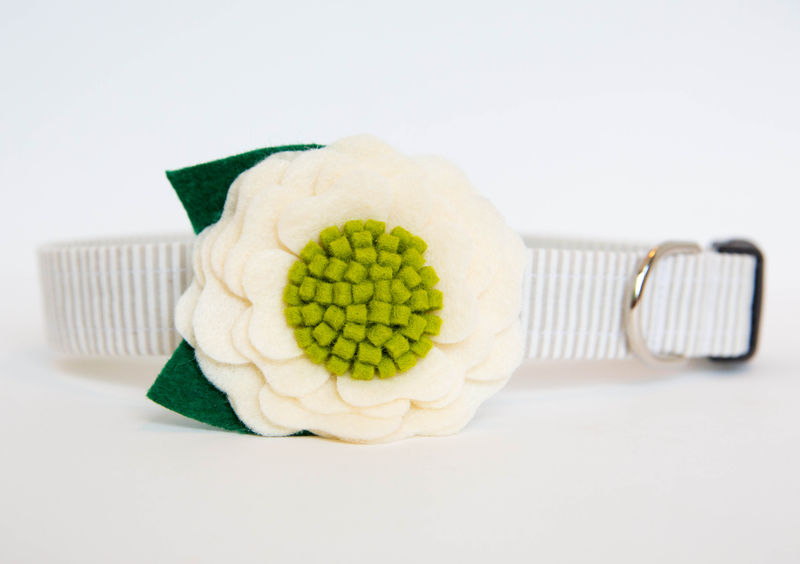 Flower Dog Collar -  Ivory Poppy - product images  of