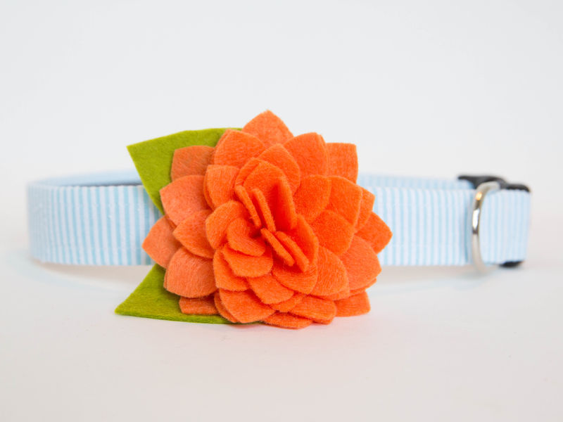 Flower Dog Collar -  Orange Dahlia Seersucker - product images  of
