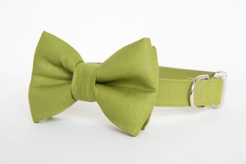 Dog,Bow,Tie,Collar,-,Okra,Green,Gentleman's,dog collar, dog bow tie, dog bowtie, bow tie dog collar, bowtie dog collar, wedding dog collar, green, houndstooth