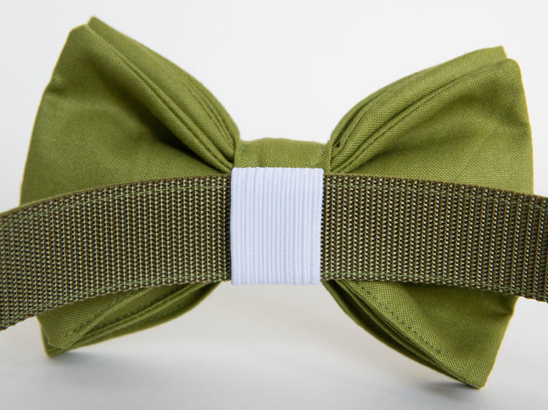 Dog Bow Tie Collar - Okra Green Gentleman's Collar - product images  of