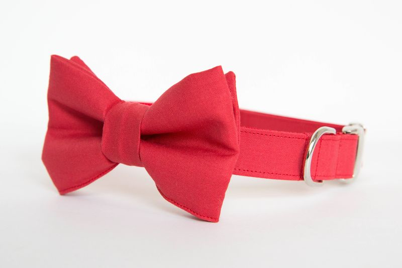 Dog Bow Tie Collar - Red Gentleman's Bow Tie - product images  of