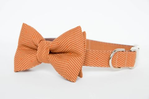 Dog,Bowtie,Collar,-,Autumn,Orange,Herringbone,dog collar, dog bow tie, dog bowtie, bow tie dog collar, bowtie dog collar, wedding dog collar, orange, herringbone