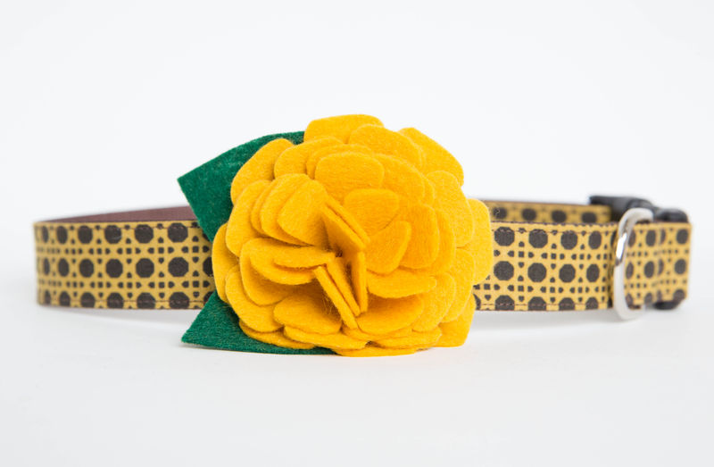 Flower Dog Collar -  Gold Mum - product images  of