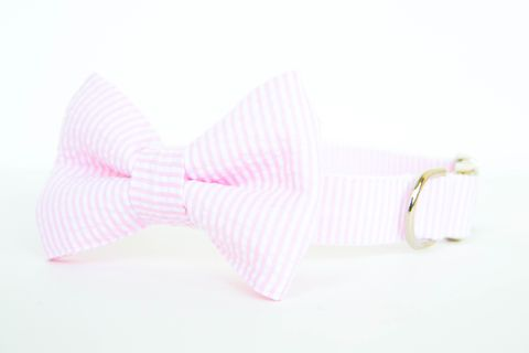 Pale,Pink,Seersucker,Dog,Bowtie,Collar,dog collar, dog bow tie, dog bowtie, bow tie dog collar, bowtie dog collar, seersucker dog collar, pink