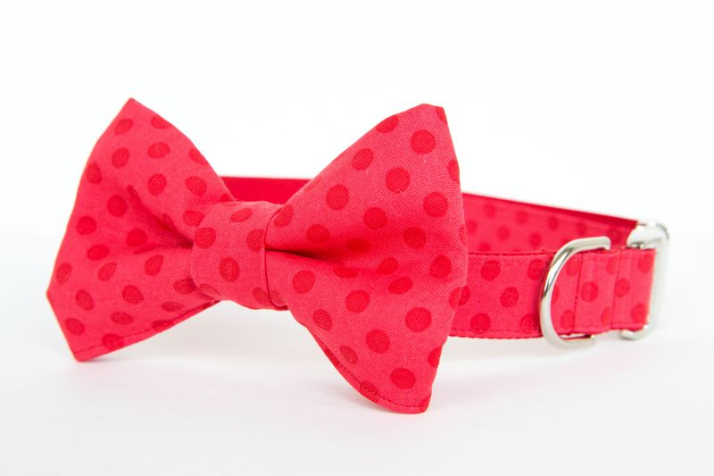 Double Red Dots Bowtie Dog Collar - product images  of
