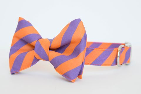 Clemson,University,Stripe,Bowtie,Dog,Collar,dog collar, dog bow tie, dog bowtie, bow tie dog collar, bowtie dog collar, stripes, clemson, tigers, orange, purple