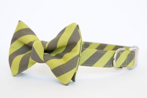 Olive,&,Apple,Academy,Stripe,Bowtie,Dog,Collar,dog collar, dog bow tie, dog bowtie, bow tie dog collar, bowtie dog collar, stripes, green