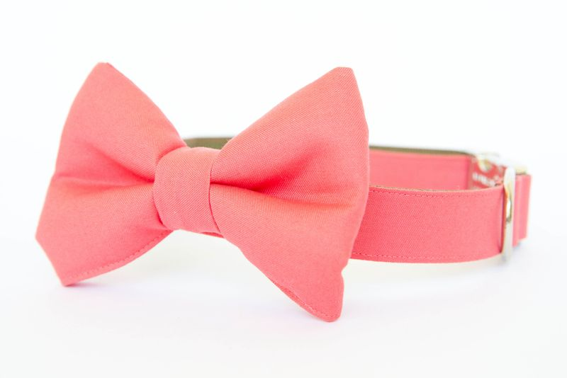 Coral Gentleman's Bow Tie Dog Collar - product images  of