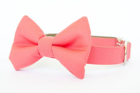 Coral,Gentleman's,Bow,Tie,Dog,Collar,dog collar, dog bow tie, dog bowtie, bow tie dog collar, bowtie dog collar, wedding dog collar, pink