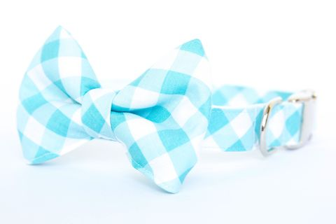 Dog,Bowtie,Collar,-,Turquoise,Gingham,dog collar, dog bow tie, dog bowtie, bow tie dog collar, bowtie dog collar, gingham dog collar, gingham, turquoise, wedding dog collar