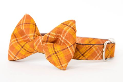 Bow,Tie,Dog,Collar,-,Pumpkin,Plaid,dog collar, dog bow tie, dog bowtie, bow tie dog collar, bowtie dog collar, nautical dog collar, madras dog collar, plaid dog collar, tartan dog collar, fall dog bow tie, orange