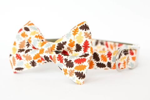 Bowtie,Dog,Collar,-,Autumn,Leaves,dog collar, dog bow tie, dog bowtie, bow tie dog collar, bowtie dog collar, nautical dog collar, fall dog bow tie, orange, autumn