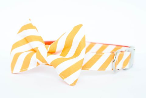 Tennessee,Vols,Striped,Bowtie,Dog,Collar,dog collar, dog bow tie, dog bowtie, bow tie dog collar, bowtie dog collar, stripes, sec dog collar, tennessee vols, orange, white