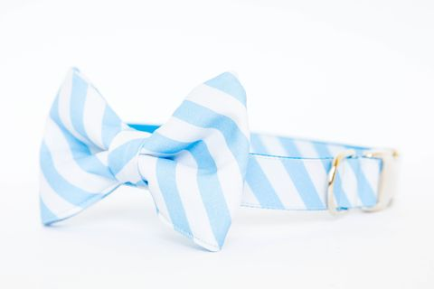 North,Carolina,Tarheels,Striped,Bowtie,Dog,Collar,dog collar, dog bow tie, dog bowtie, bow tie dog collar, bowtie dog collar, stripes, acc dog collar, unc dog collar, north carolina dog collar, tar heels, tarheel blue