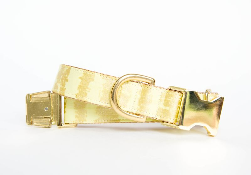 Citron and Gold Sketch Dog Collar - product image