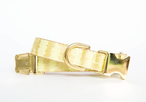Citron,and,Gold,Sketch,Dog,Collar,gold dog collar, metallic, citron dog collar, yellow and gold dog collar, metallic gold, yellow dog collar