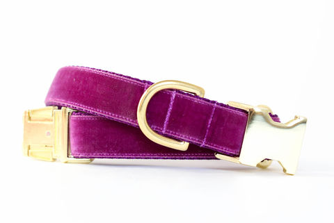 Luxe,Velvet,Dog,Collar,in,Plum,velvet dog collar, velveteen dog collar, classic velvet, classic dog collar, vintage style dog collar, plum velvet dog collar, purple velvet dog collar