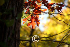 The,Last,Leaves,Art,Photography,Nature,nature,autumn,fall,leaves,etsynj,housewarming,living_room,dining_room