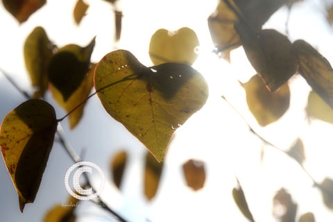 My,Heart,Speaks,Art,Photography,Nature,love,hearts,hearts_of_nature,leaf_hearts,leaves,fall,autumn,wedding_gift,engagement_gift,housewarming,etsynj_team