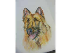 Pet,Portrait,Deposit,8,by,10,Pet portrait, pets, art, original, commission, dog, cat, horse