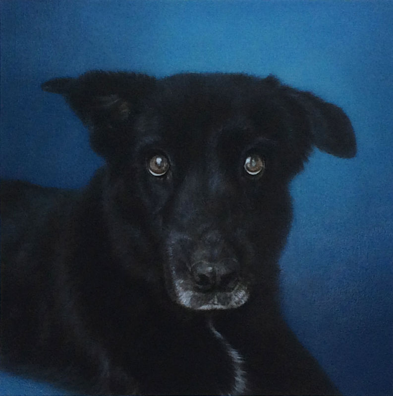 Commission a painting of your pet! (send me a message, do not add to cart) - product images  of