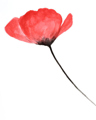 Red,Poppy,(original,watercolor),red poppies, watercolor, red flower, red poppy