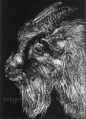 Goatee,-,Original,Goat,Scratchboard,ACEO/ATC, scratchboard, original,drawing,goat,black and white,farm animal, wabibrookstudio, ontario, temiskaming shores