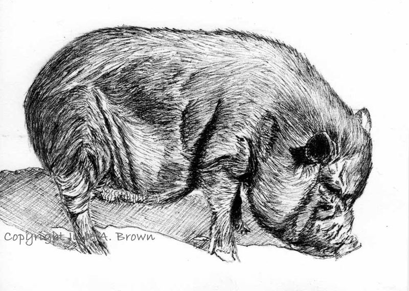 Truffles the Pig - Original Pen and Ink ACEO/ATC Drawing Art Card Free Shipping - product images