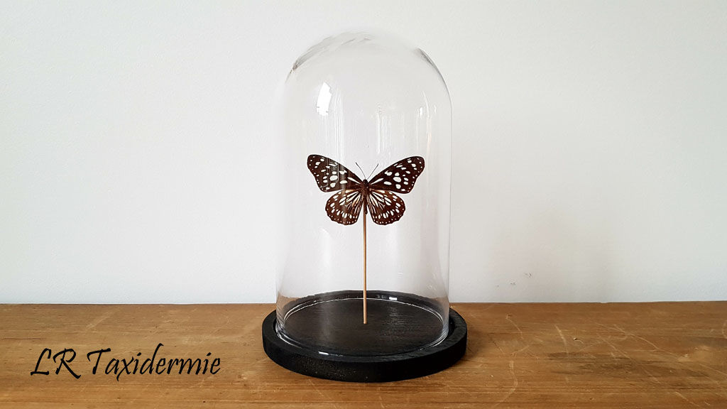 Cloche papillon N°17 - product images  of